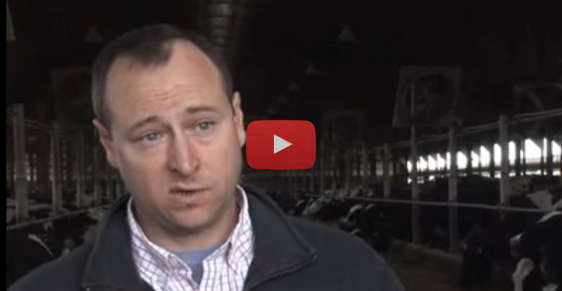 Interview about dg precisionFEEDING with Dan Kohls, A Feed Inc.